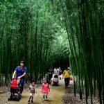 ウルサン(蔚山)の場所や行き方は?テファ江大公園の十里竹林で癒しの時間を!